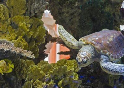 turtle-1996971_640 (1)